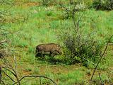 南非旅游景点攻略图片