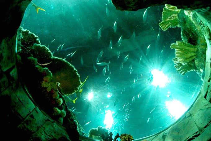 1、海洋公园区域分布图片