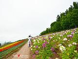 旭川旅游景点攻略图片