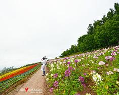 夏之北海道