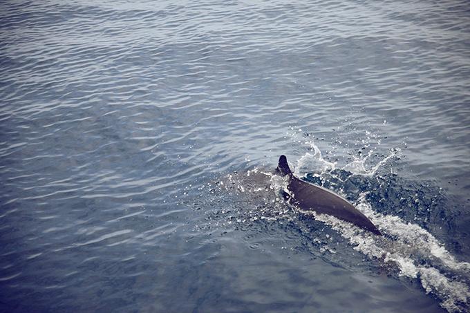 看海豚图片