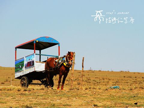 希拉穆仁草原旅游景点图片