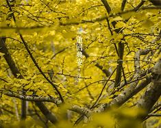 【重回兴安】-迷恋秋意,寻找回忆