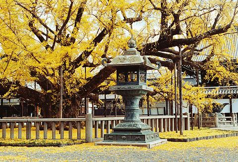 西本愿寺的图片