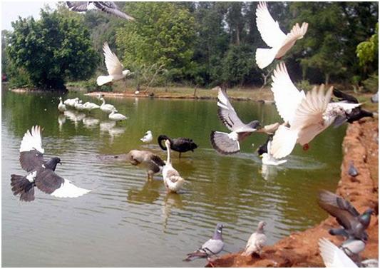 海南热带野生动植物园、东湖公园、图片