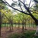 大夫山森林公园