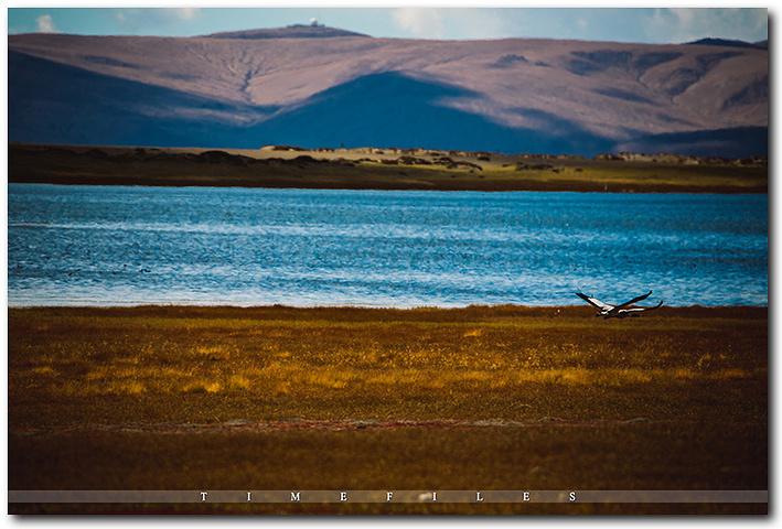 """""""湿地一旁,还有两匹午睡的白马。这就是刚才飞走的两只鹤,在另一片湿地上被我找到了_玛旁雍错""""的评论图片"""
