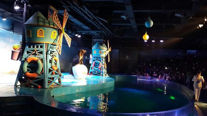 """""""北极熊特别特别可爱,一直在水里仰泳,岸上那只,一直走来走去,走到两端还给游人打个招呼,太可爱了_哈尔滨极地馆""""的评论图片"""