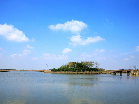 东滩湿地公园旅游景点图片