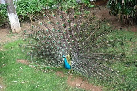 昆明动物园的图片