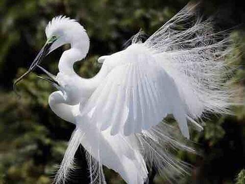 白鹭天堂旅游景点图片