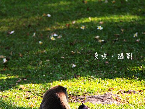 筷子山旅游景点图片