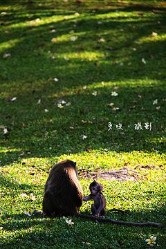 筷子山的图片