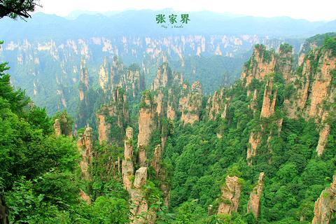 张家界国家森林公园的图片