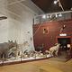 匈牙利自然历史博物馆