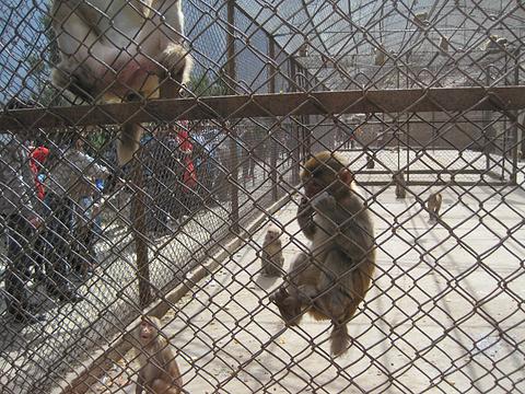 猕猴谷旅游景点攻略图
