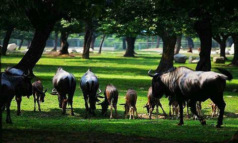 秦岭野生动物园旅游景点攻略图