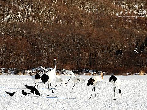 钏路市丹顶鹤自然公园旅游景点图片