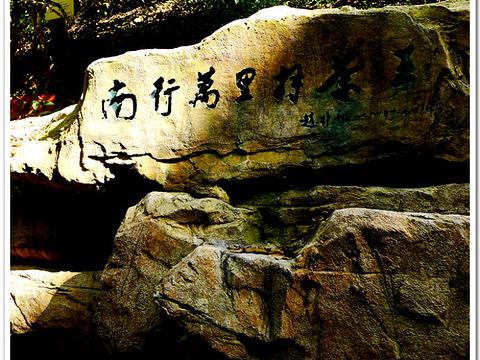 南糯山旅游景点图片