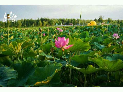 青格达湖旅游景点图片