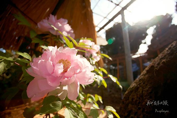 鹤冈八幡宫图片