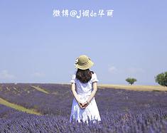 盛夏中进行的薰衣草之旅--法国三日自由行