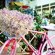 荷兰花卉小镇