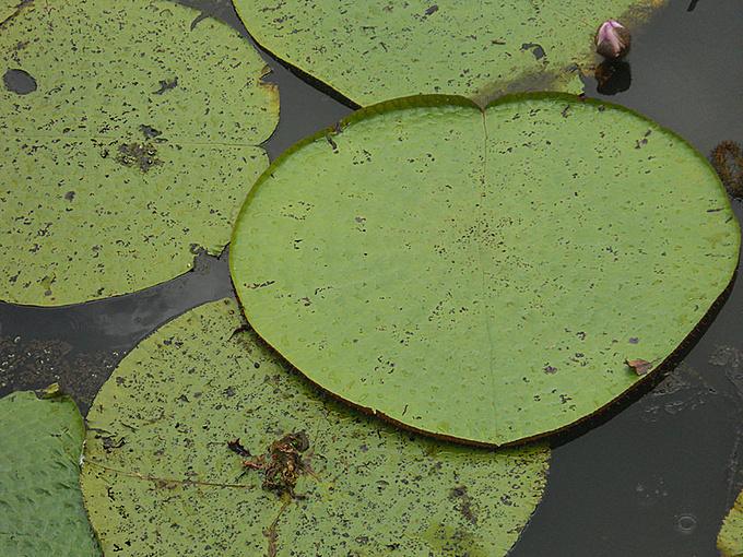 魔鬼沼泽地图片