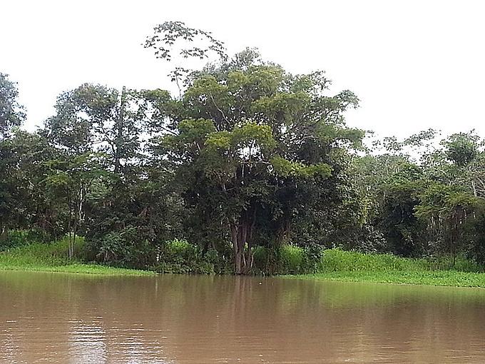 游览亚马逊图片