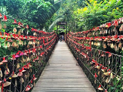 呀诺达雨林景区旅游景点图片