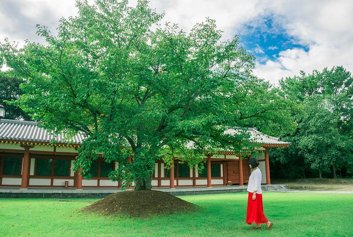 """""""但是药师寺的寺庙真的很美很宏伟_药师寺""""的评论图片"""