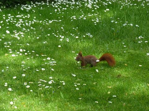 哥本哈根大学植物园旅游景点图片