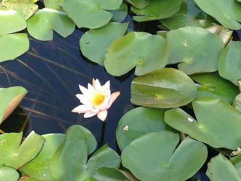 杭州湾国家湿地公园旅游景点图片