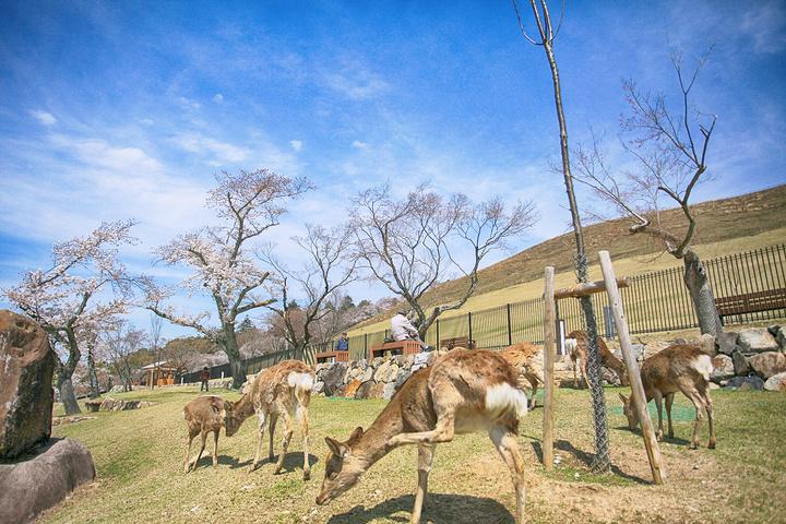 """""""奈良公园当然还有很多值得一逛的地方_奈良公园""""的评论图片"""