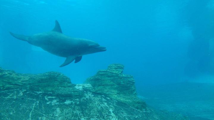 """""""五彩斑斓的小鱼、珊瑚。大概有沉船的事情,海洋馆的参观就从台风剧场沉船的故事继续展开吧。主要看海星_S.E.A.海洋馆""""的评论图片"""