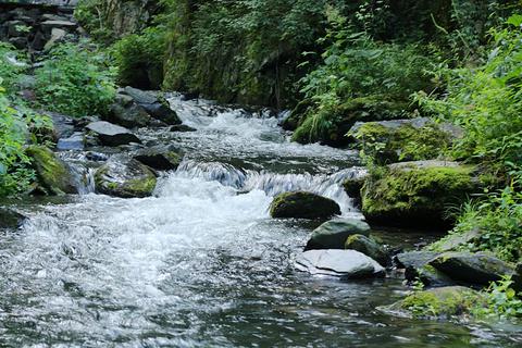 凤凰山国家森林公园的图片