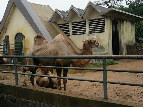 青岛动物园旅游景点图片