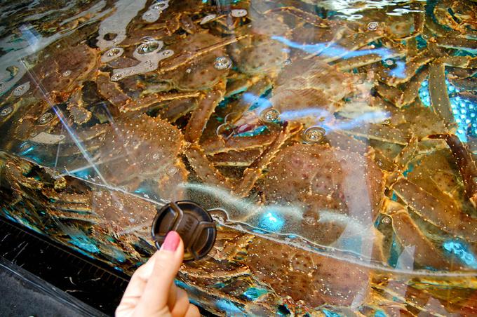 关于阿拉斯加蟹图片