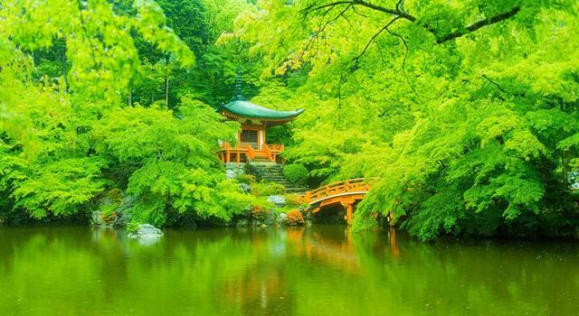 再访日本,迷蒙雨季