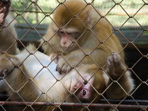 南宁市动物园旅游景点图片
