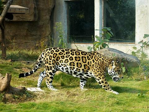 长沙生态动物园旅游景点图片