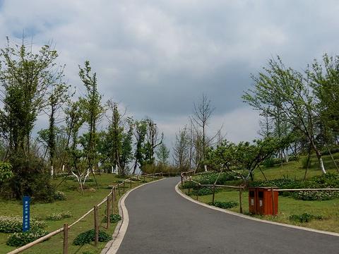 三圣花乡旅游区旅游景点图片