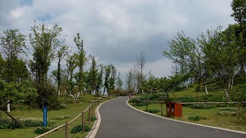 三圣花乡旅游区旅游景点攻略图