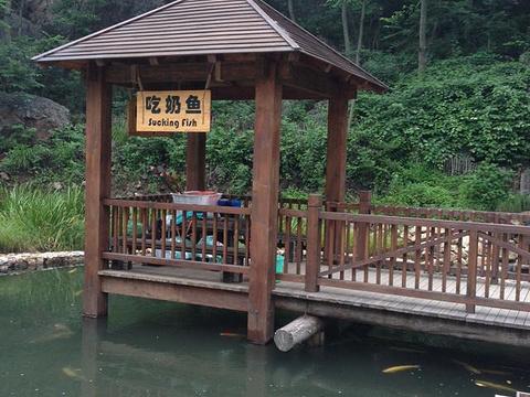 大连天门山国家森林公园旅游景点图片