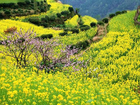 查平坦旅游景点图片
