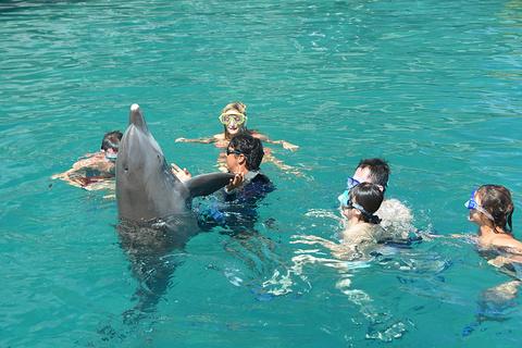 茉莉雅洲际海豚中心旅游景点攻略图