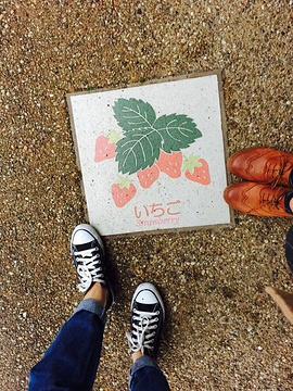 石垣苺狩り(摘草莓)旅游景点攻略图