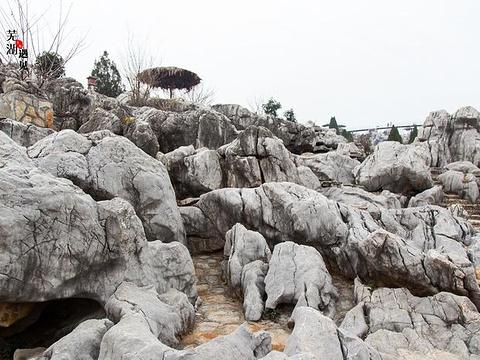 丫山花海石林旅游景点图片
