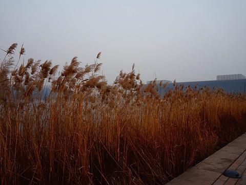 天津文化中心旅游景点图片