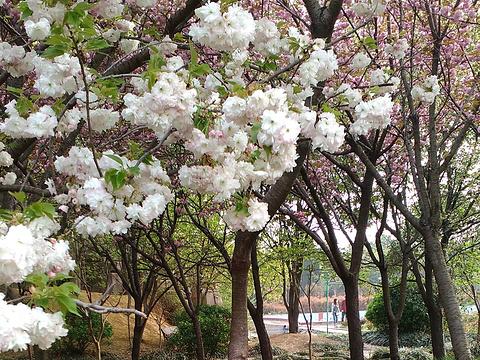 禹州森林植物园旅游景点图片